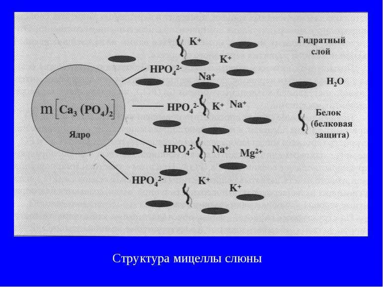 Структура мицеллы слюны