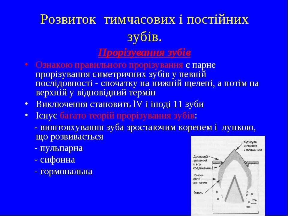 Прорізування зубів Ознакою правильного прорізування є парне прорізування симе...