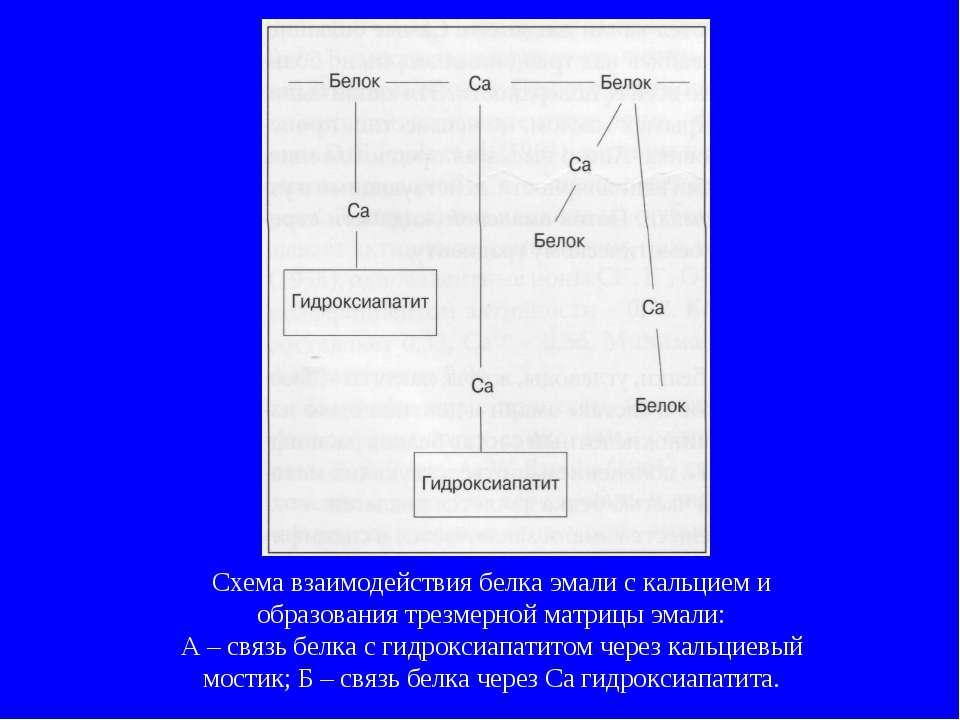 Схема взаимодействия белка эмали с кальцием и образования трезмерной матрицы ...