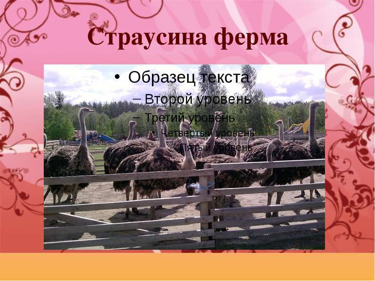 Страусина ферма