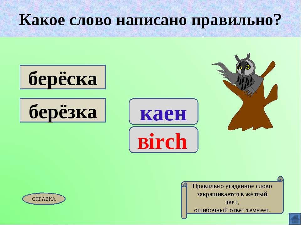Какое слово написано правильно? каен Birch берёска берёзка Какое слово написа...