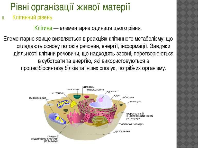 Рівні організації живої матерії Клітинний рівень. Клітина— елементарна один...
