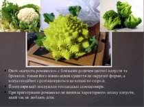 Овоч «капуста романеско» є близьким родичем цвітної капусти та брокколі, тіль...