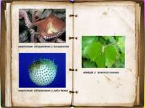загрозливе забарвлення у восьминога загрозливе забарвлення у риби-їжака мімік...