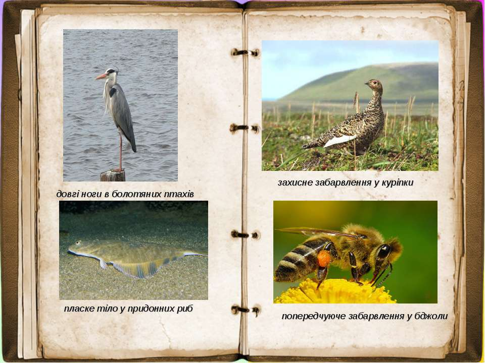 довгі ноги в болотяних птахів пласке тіло у придонних риб захисне забарвлення...