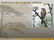 Значення та охорона птахів Значення птахів у природі й у житті людини дуже ве...