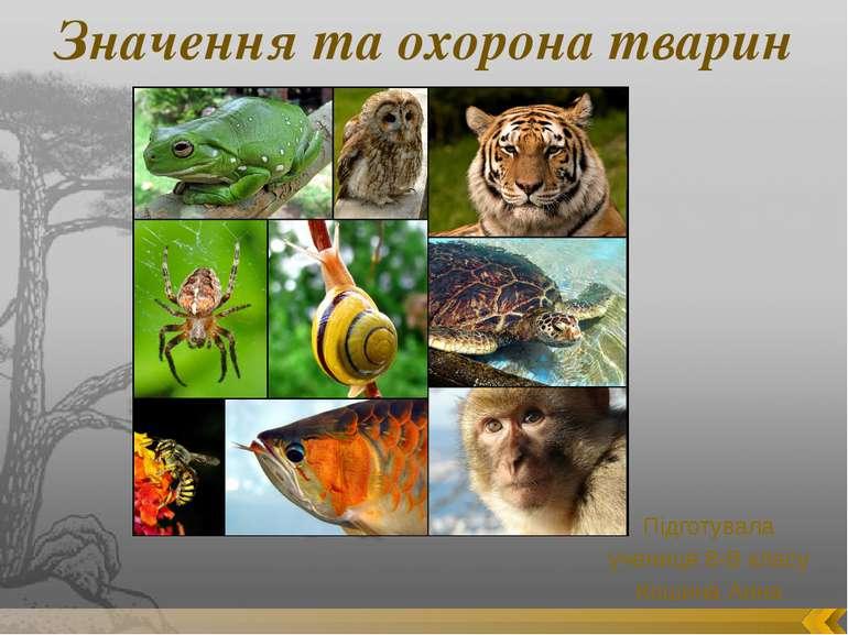 Значення та охорона тварин Підготувала учениця 8-В класу Кошина Анна