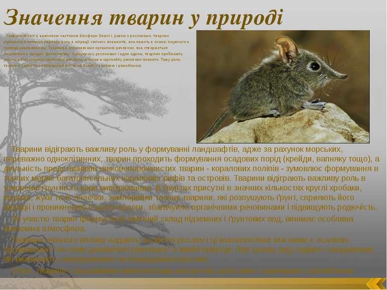 Значення тварин у природі Тваринний світ є важливою частиною біосфери Землі і...