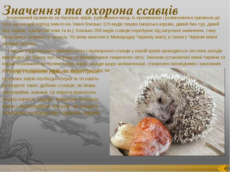 Значення та охорона ссавців Інтенсивний промисел на багатьох звірів, руйнуван...