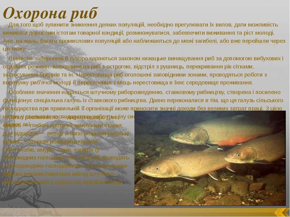 Охорона риб Для того щоб зупинити зникнення деяких популяцій, необхідно врегу...