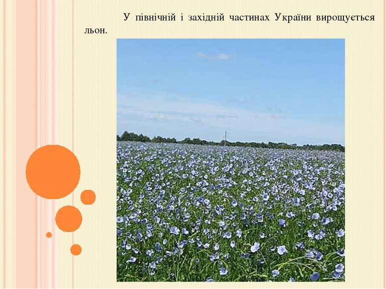 У північній і західній частинах України вирощується льон.