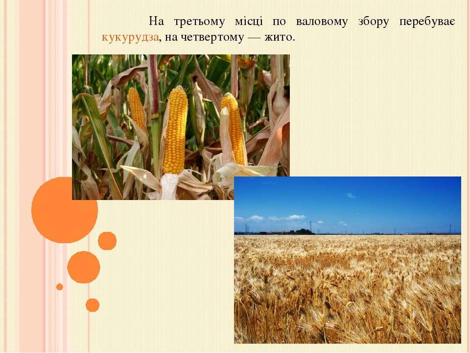 На третьому місці по валовому збору перебуває кукурудза, на четвертому— жито.