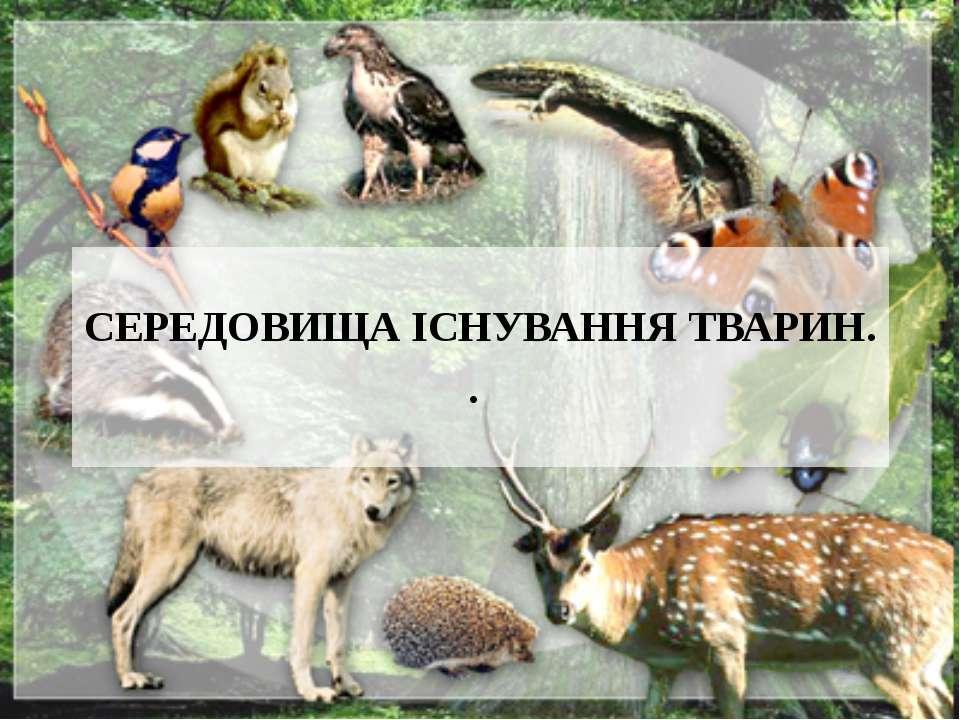 СЕРЕДОВИЩА ІСНУВАННЯ ТВАРИН. .