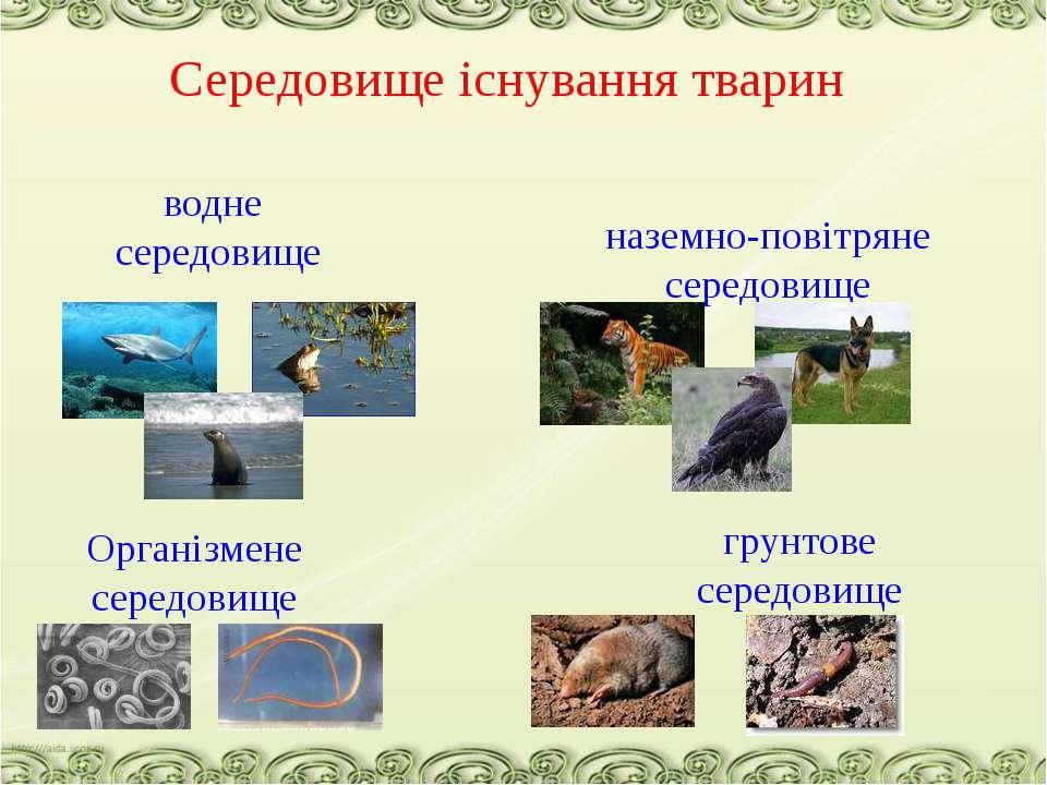 Середовище існування тварин водне середовище наземно-повітряне середовище гру...