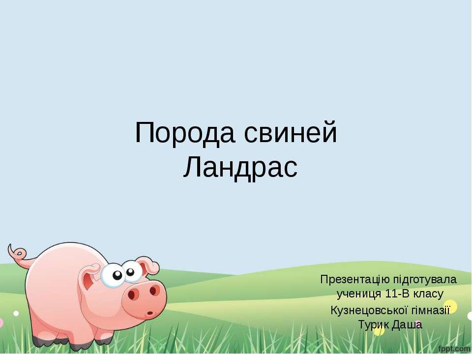 Порода свиней Ландрас Презентацію підготувала учениця 11-В класу Кузнецовсько...