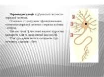 Нервова регуляція відбувається за участю нервової системи. Основним структурн...