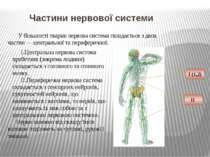 У більшості тварин нервова система складається з двох частин—центральноїта...