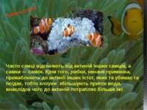 Часто самці відганяють від актиній інших самців, а самки— самок. Крім того, ...