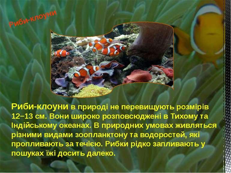 Риби-клоуни в природі не перевищують розмірів 12−13 см. Вони широко розповсюд...
