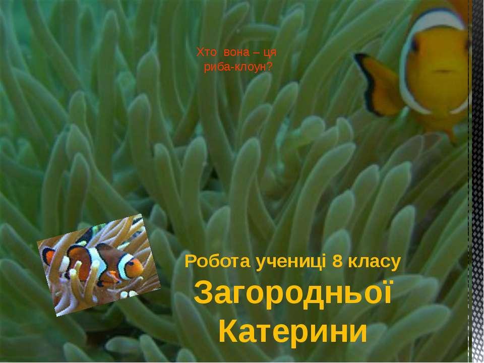 Хто вона – ця риба-клоун? Робота учениці 8 класу Загородньої Катерини