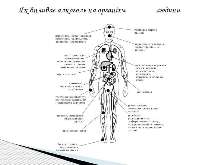 Як впливає алкоголь на організм людини