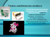 Гормоны вырабатываемые гипофизом. Соматотропин(соматотропный гормон, СТГ, сом...