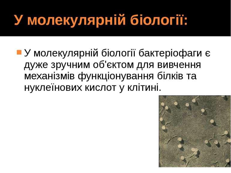 У молекулярній біології: У молекулярній біології бактеріофаги є дуже зручним ...
