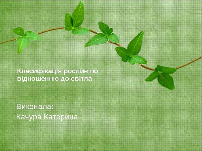Класифікація рослин по відношенню до світла Виконала: Качура Катерина
