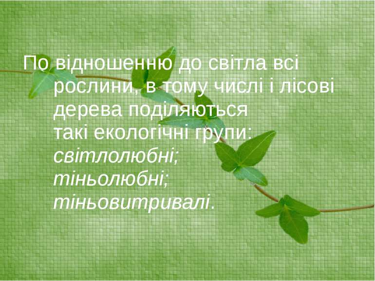По відношенню до світла всі рослини, в тому числі і лісові дерева поділяються...