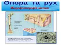 Мікрофотографія кістки