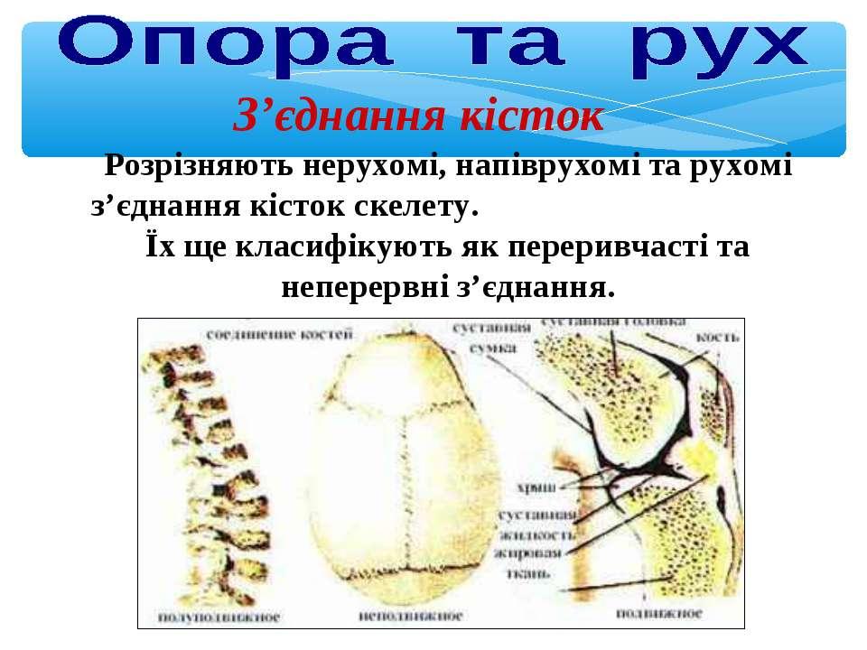 З'єднання кісток Розрізняють нерухомі, напіврухомі та рухомі з'єднання кісток...