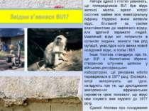 Автори однієї з гіпотез уважають, що попередником ВІЛ був вірус зеленої мавпи...