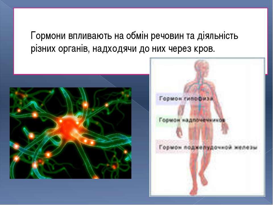 Гормони впливають на обмін речовин та діяльність різних органів, надходячи до...