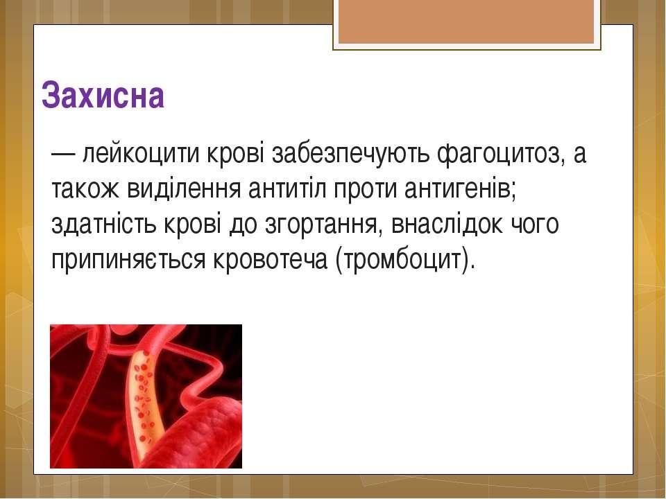 Захисна — лейкоцити крові забезпечують фагоцитоз, а також виділення антитіл п...