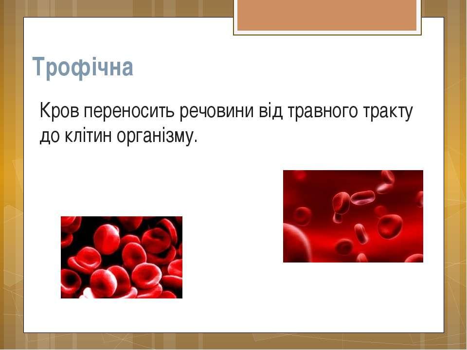 Трофічна Кров переносить речовини від травного тракту до клітин організму.