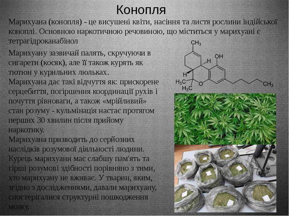 Конопля Марихуана (конопля) - це висушені квіти, насіння та листя рослини інд...