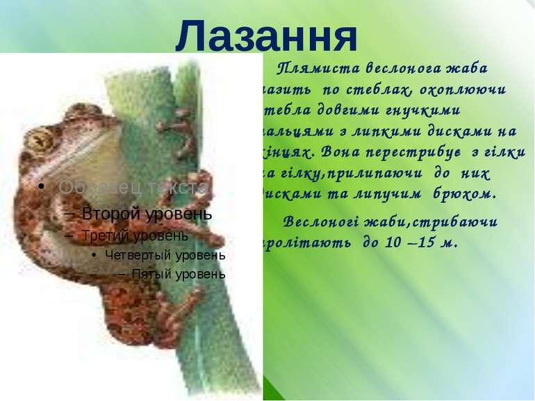 Лазання Плямиста веслонога жаба лазить по стеблах, охоплюючи стебла довгими г...