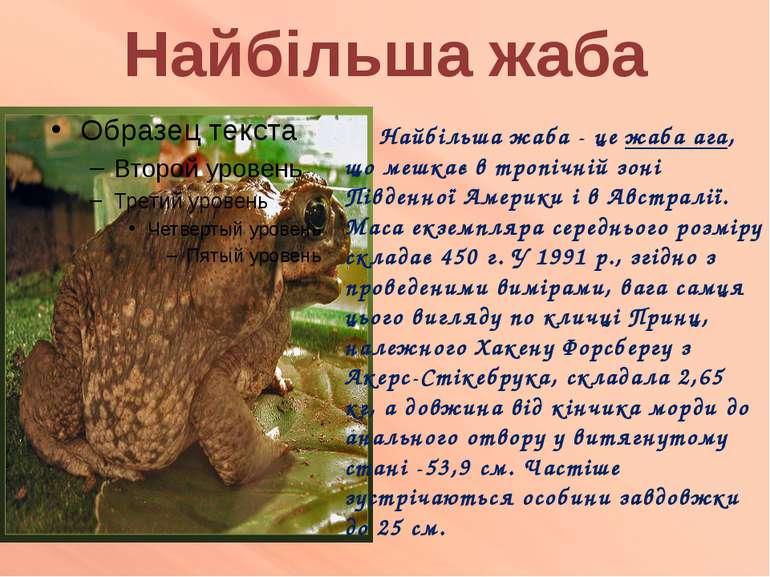 Найбільша жаба Найбільша жаба - це жаба ага, що мешкає в тропічній зоні Півде...