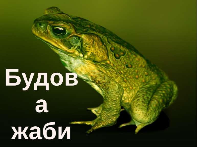 Будова жаби