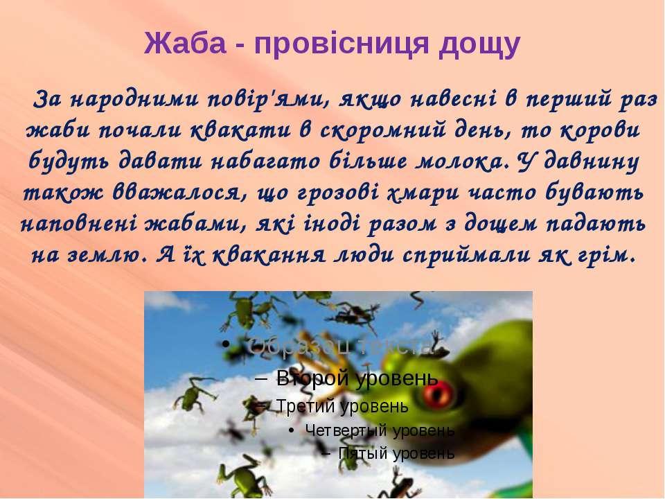 Жаба - провісниця дощу За народними повір'ями, якщо навесні в перший раз жаби...