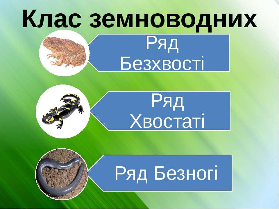 Клас земноводних