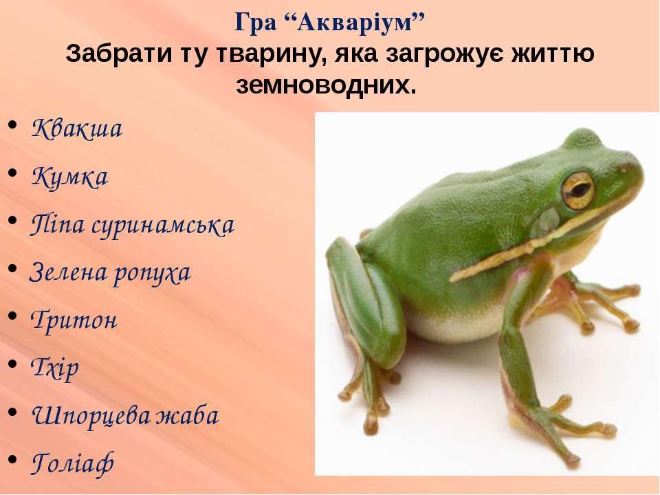 Квакша Кумка Піпа суринамська Зелена ропуха Тритон Тхір Шпорцева жаба Голіаф ...