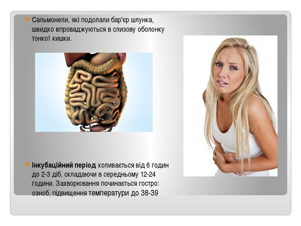 Сальмонели, які подолали бар'єр шлунка, швидко впроваджуються в слизову оболо...