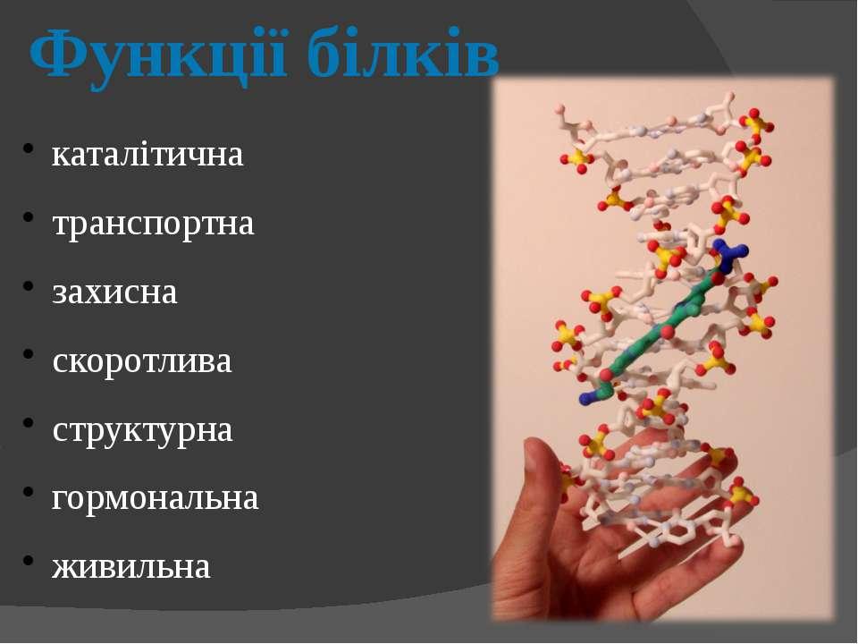 Функції білків каталітична транспортна захисна скоротлива структурна гормонал...