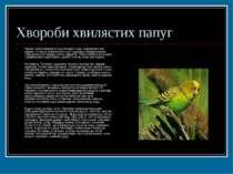 Хвороби хвилястих папуг Пронос може виникнути від холодної води, недоброякісн...