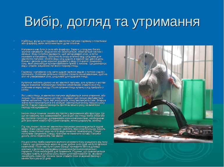 Вибір, догляд та утримання Найбільш зручні для годування хвилястих папужок го...