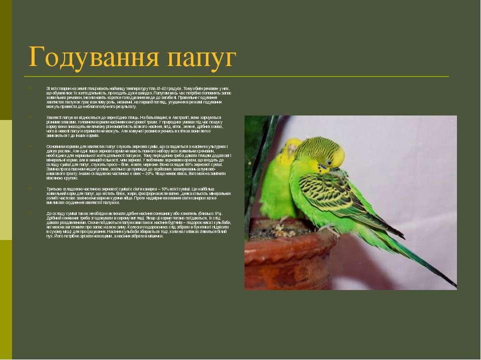Годування папуг Зі всіх тварин на землі птиці мають найвищу температуру тіла ...