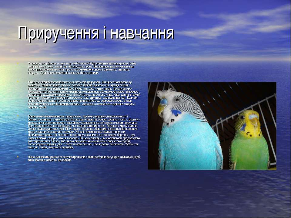 Приручення і навчання У природі зустрічаються такі птиці, які без всякої підг...