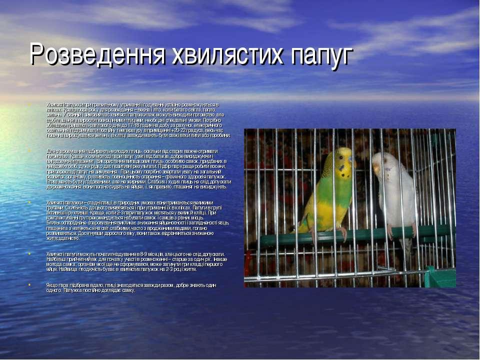 Розведення хвилястих папуг Хвилясті папужки при правильному утриманні і годув...