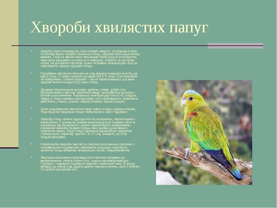 Хвороби хвилястих папуг Хворобу легко попередити, чим лікувати хворого. Це ві...